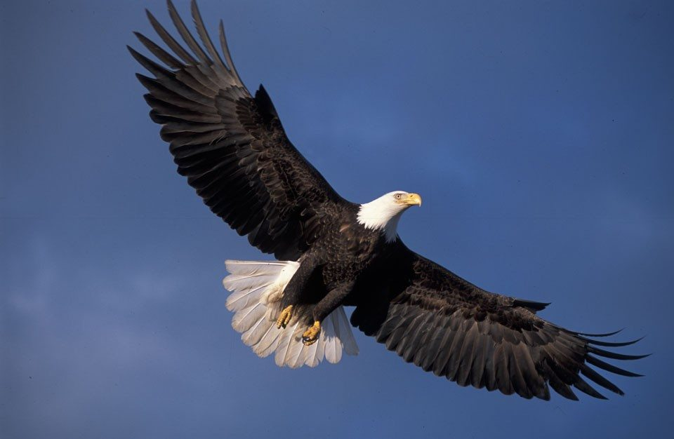 Qualities of an eagle pdf
