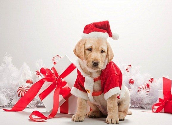 christmas-pet - awesome christmas gifts