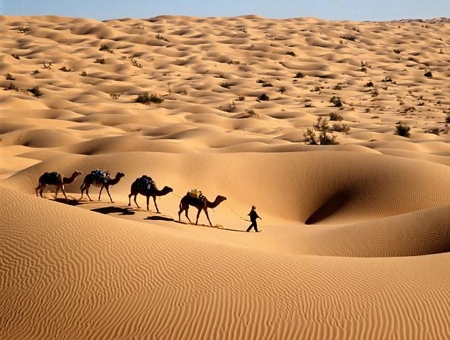 Image result for sahara desert in africa
