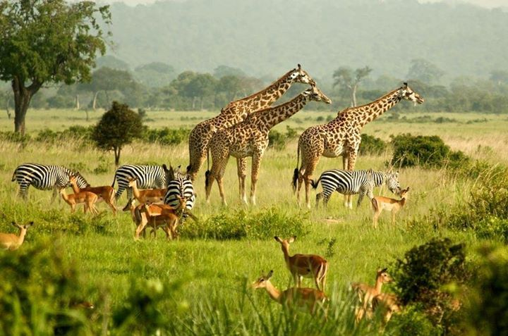 Uganda Is One Of The World's Most Beautiful Places
