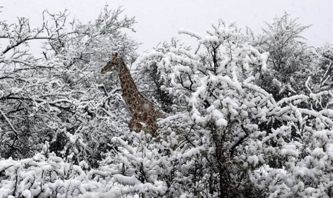 Snow in Africa